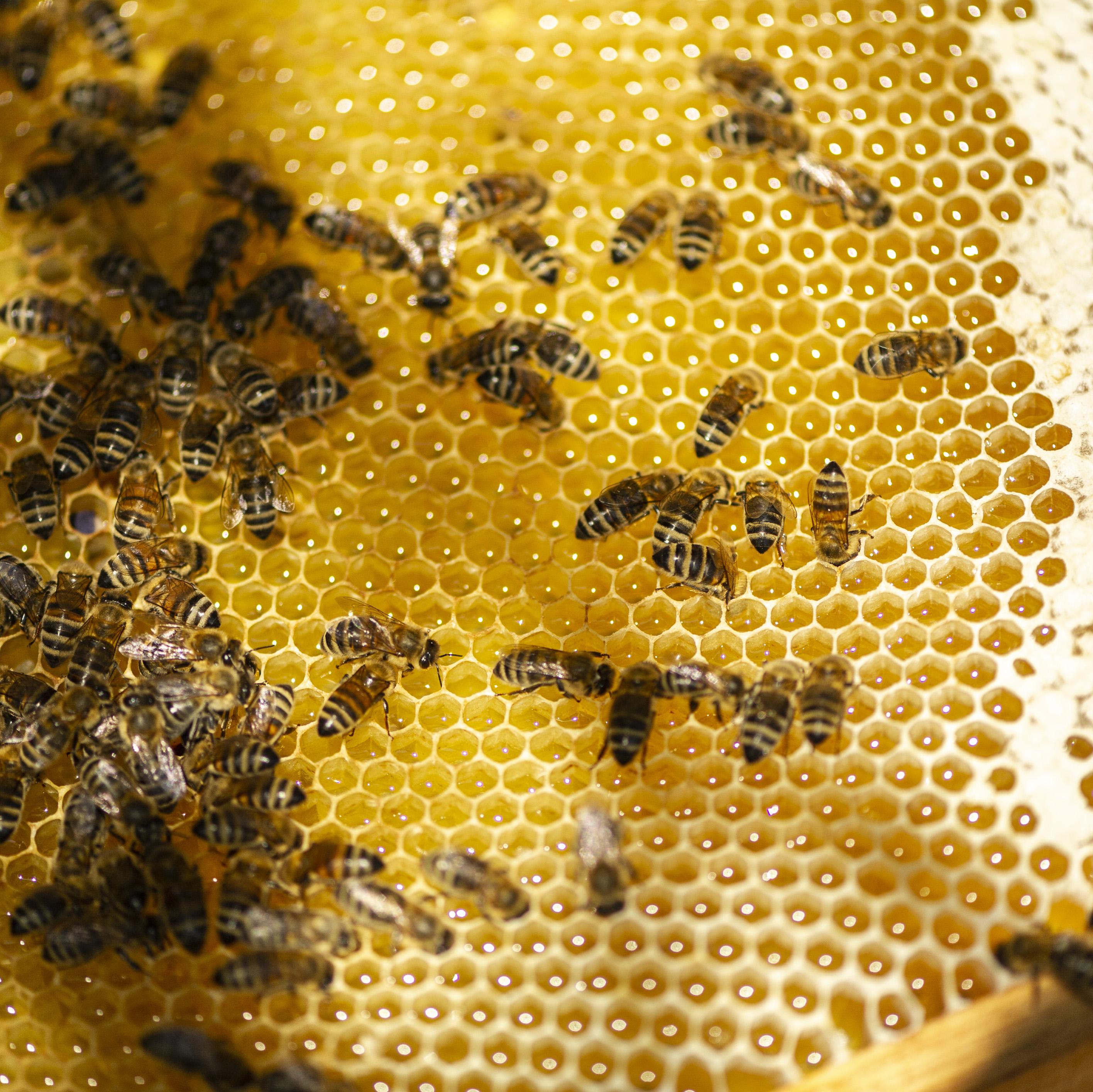 wynajem ula; mecenat pszczeli; adoptuj pszczoły; adopcja pszczół; ul na wynajem