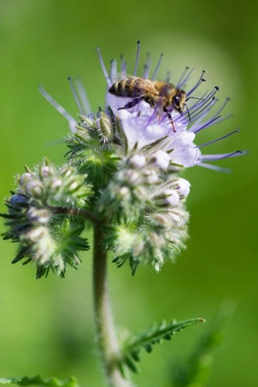 Adopcja pszczół